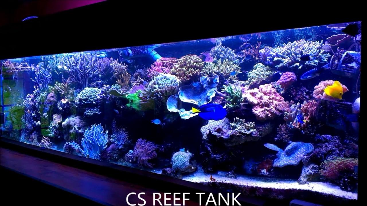 big reef tank riff aquarium 1500 liter 400 gallons youtube. Black Bedroom Furniture Sets. Home Design Ideas