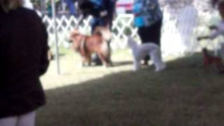 Bahamas Kennel Club 29th International Dog Show And Obedience Trials
