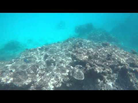 Folkstone marine park - Hawksbill sea turtle