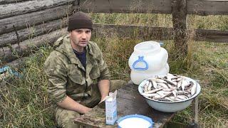 Так солят рыбу на севере. Засолка зельдя на зиму. Все очень просто!!!