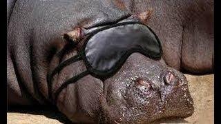 Онлайн смешное видео про животных