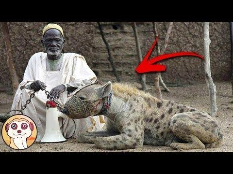10 ANIMALI SPAVENTOSI CHE GLI UOMINI HANNO SCAMBIATO PER ANIMALI DOMESTICI
