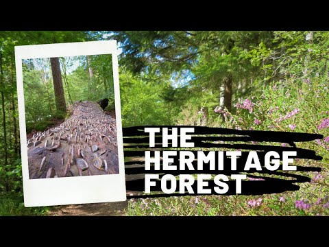 A Guide to Visiting The Hermitage Forest in Perthshire, Scotland