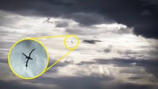 5 Unidentified Flying Creatures Caught On Camera & Spotted In Real Life!