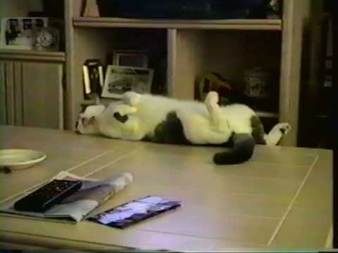 Funny cat falls off a table - YouTube