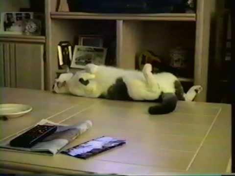 Genial Funny Cat Falls Off A Table