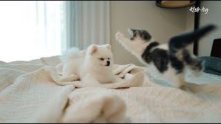 "[vlog] raising munchkin kitten ""Soseol""' (ep 6)"