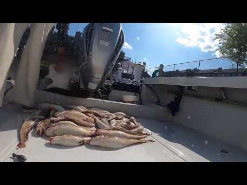 Ling Fishing NJ