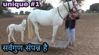 White nukri mare sell ||सफेद मारवाड़ी घोड़ी || सर्वगुण संपन्न ||