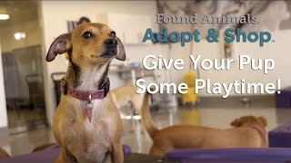 give your pup some playtime adopt shop culver city