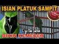 Cucak Ijo Gacor Full Isian Tembakan Pelatuk Sampit Mantap Bikin Kemecer Om Sulton Pati  Mp3 - Mp4 Download