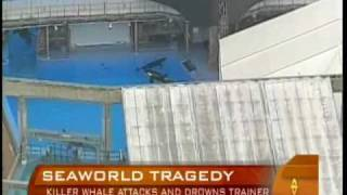 Killer Whale Grabs, Drowns Trainer