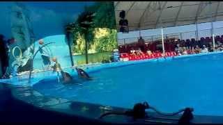 Дельфинарий Феодосия(, 2012-09-12T12:14:01.000Z)
