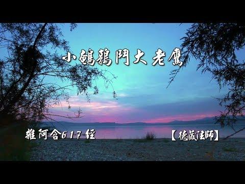 雜阿含617經-01.小鵪鶉鬥大老鷹【德藏法師】