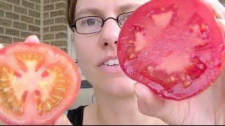 Wat is het verschil tussen tomaten vers uit eigen tuin en deze die je koopt in de winkel?