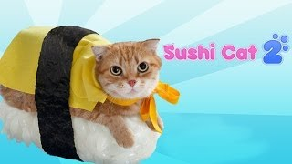Repeat youtube video Sushi Cat 2