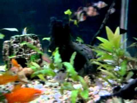 Mi acuario comunitario de 600 litros youtube for Acuario comunitario
