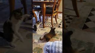 Funny dog and kitten