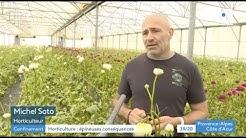 Impact du CORONAVIRUS pour les horticulteurs - GAEC AZUR ROSES à La Crau (83)