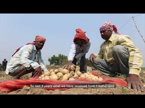 Farmers in West Bengal working with PepsiCo India for potato farming
