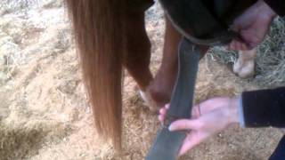 How to put on a Horse Blanket