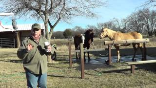 horse escapes poor fence mr t runs off for greener grass part 3 of 3