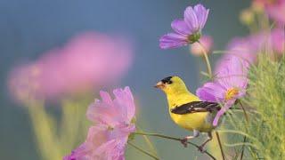 Beautiful Instrumental Music, Peaceful Relaxing  Music \