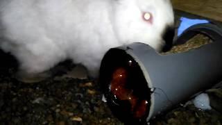 #САМОДЕЛКИ  Как сделать кормушку для кроликов из труб