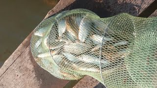 рыбалка на Днестре / НЕОЖИДАННОЕ КУПАНИЕ
