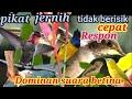 Pikat Burung Kecil Jernih Dominan Suara Betina Pleci Sogon Cimblek Dan Suara Burung Jantan Lainnya  Mp3 - Mp4 Download