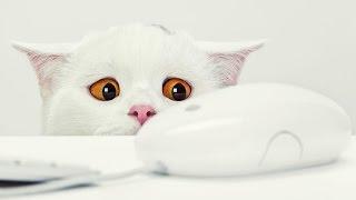 Любознательный кот  Хочу познать компьютер