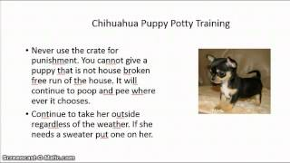 How Can I House Train My Chihuahua Puppy | Free Mini Course