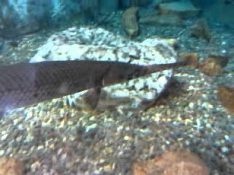 Aquarium at Bass Pro Shop in Harrisburg PA