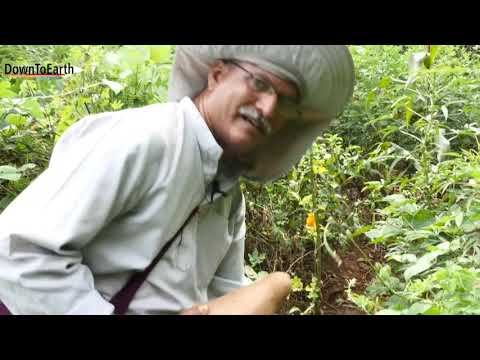 The Aranya storyturning barren land into a food forest using permaculture