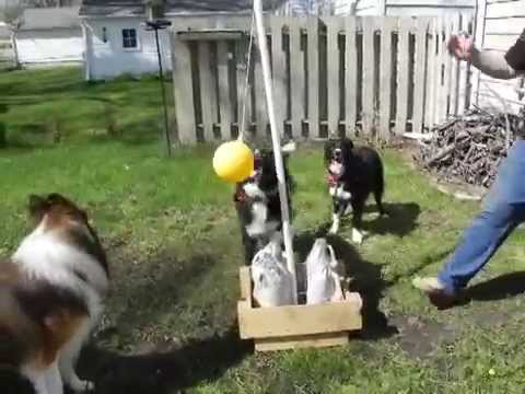 tether ball with dogs youtube
