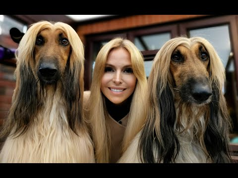 THE AFGHAN HOUND - The World's Most Glamorous Dog