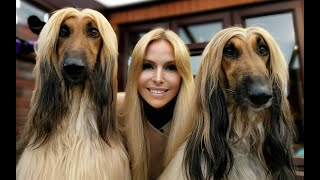 THE AFGHAN HOUND  The World's Most Glamorous Dog