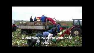 TRANSPORTER 2-poziomowy do zbioru warzyw ŁUCZAK Maszyny Rolnicze