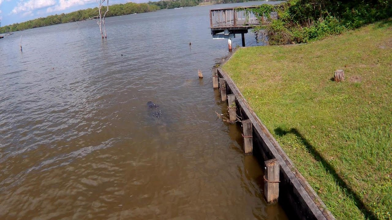 Don 39 t fall in gator on lake livingston easter for Lake livingston fishing report