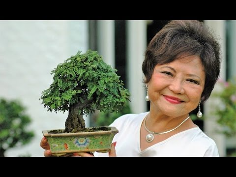 World-Renowned Bonsai Artist and Her Bonsai Masterpieces