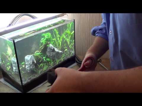 Аквариум 20 литров сколько можно там держать рыбок
