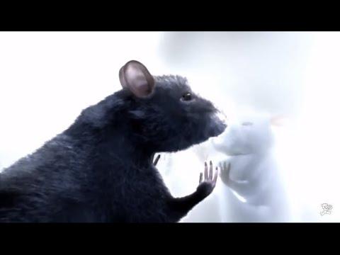 Крысы смотреть мультфильм