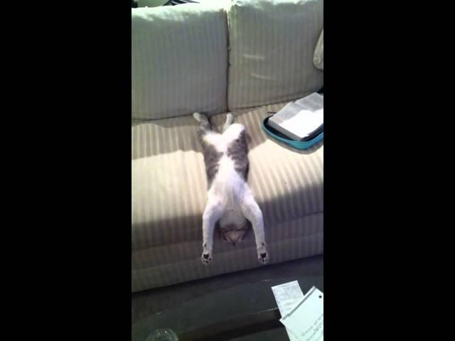 Cat Sleeping – Funny!