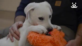 Puppy with canine megaesophagus gets help