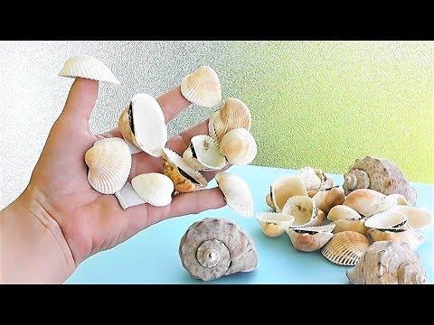 Как делать сувениры из ракушек своими руками