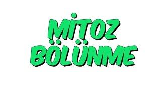 7-snf-fen-bilimleri-mitoz-blnme