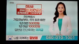 SBS-TV 네트워크특…