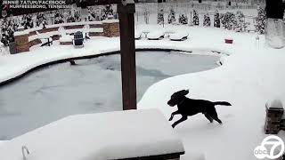 Tennessee woman jumps into frozen swimming pool to rescue dog | ABC7