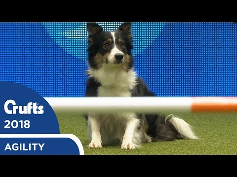 Agility - Kennel Club Novice Cup Final (Agility) Part 2 | Crufts 2018