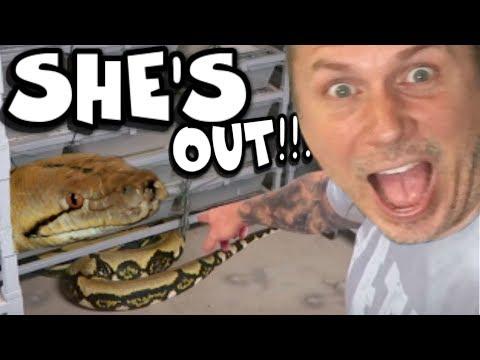 She Let A 20 Foot Snake Escape!!! Chaos Follows!!!  Brian Barczyk